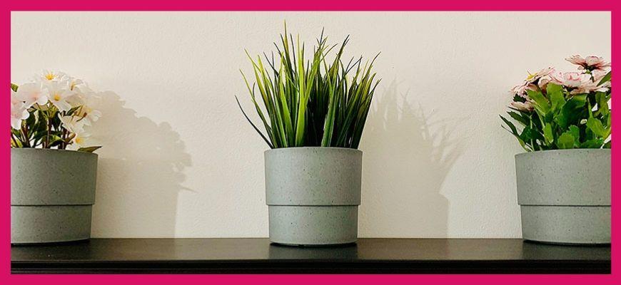 комнатные денежные растения